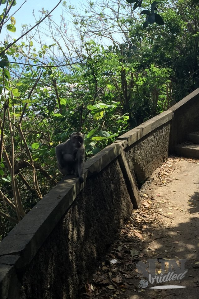 Beaches and monkeys: monkeys sitting on the edge of the stairs to observe the visitors