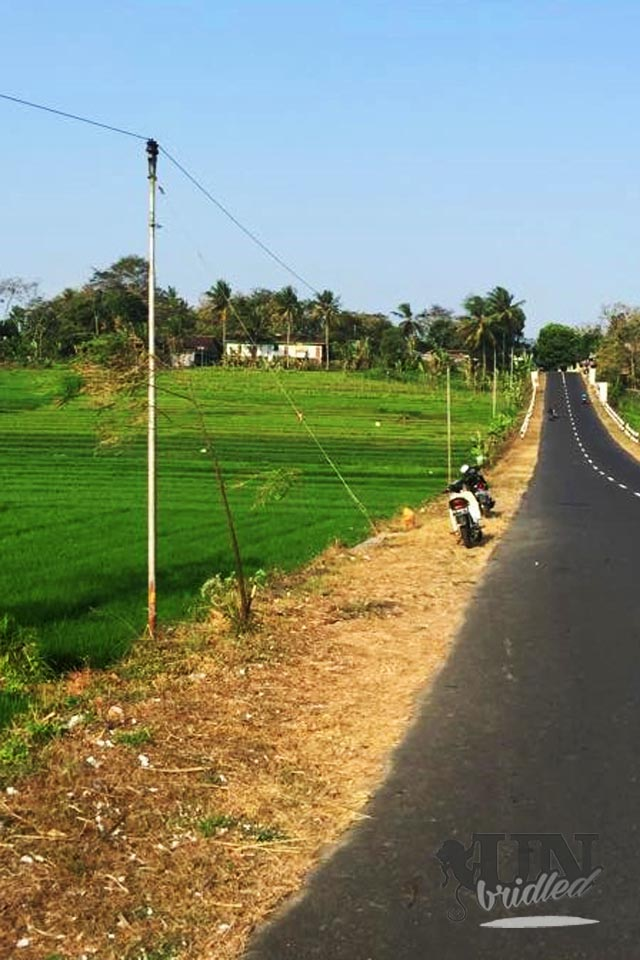 Road in the West of Yogyakarta goes through rise fields