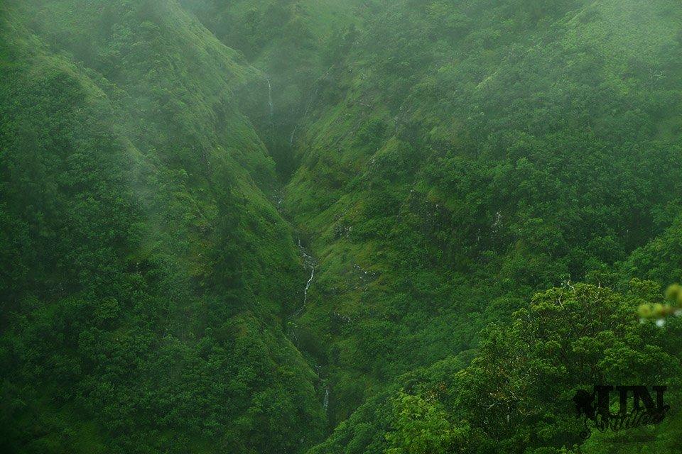 Ein Wasserfall am gegenüberliegenden Bergkamm der Kuliouou Ridge, welcher sich durch den Wald schlängelt
