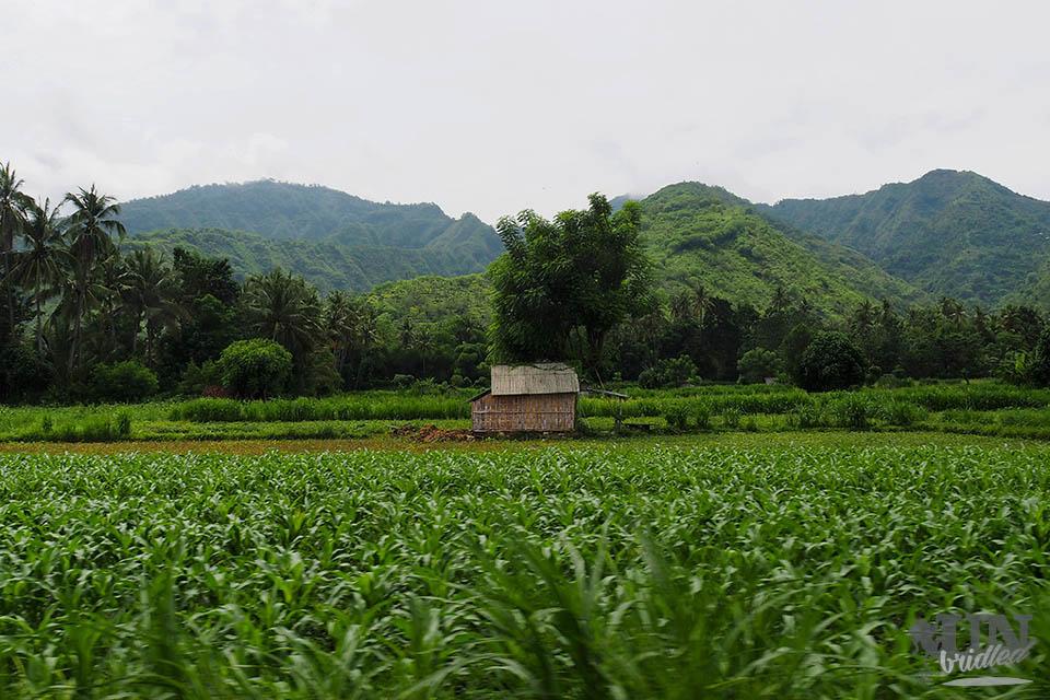 Aktivitäten in Amed können auch auf dem Land geschehen. Mit dem Roller an Reisfeldern vorbei, kann erkundet werden.