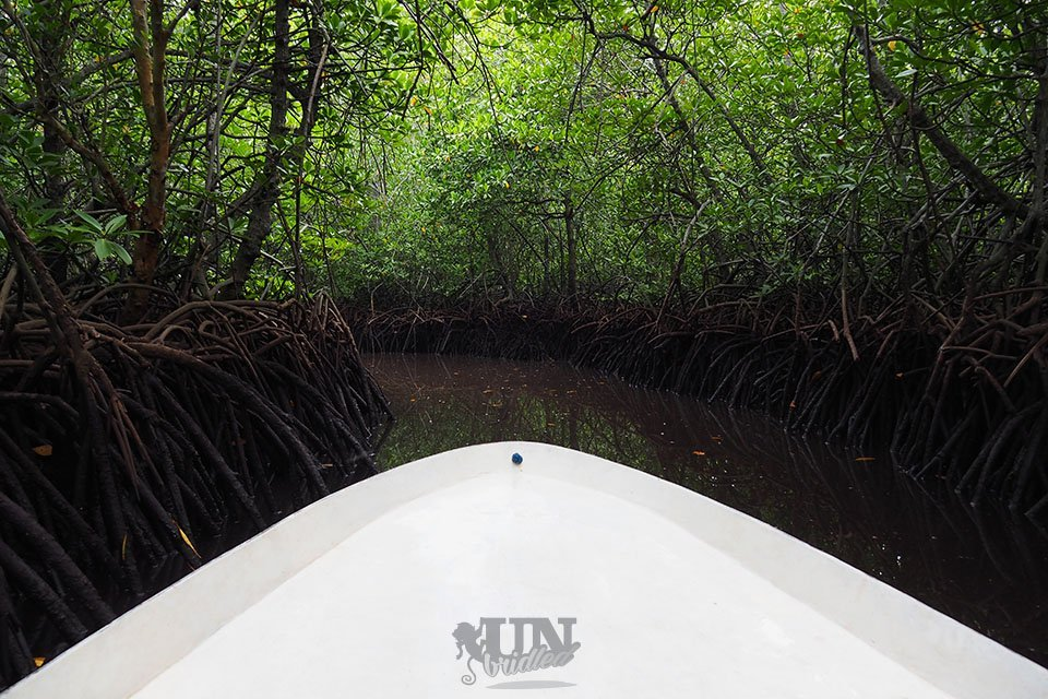 Mangrove tour with a boat in Nusa Lembongan