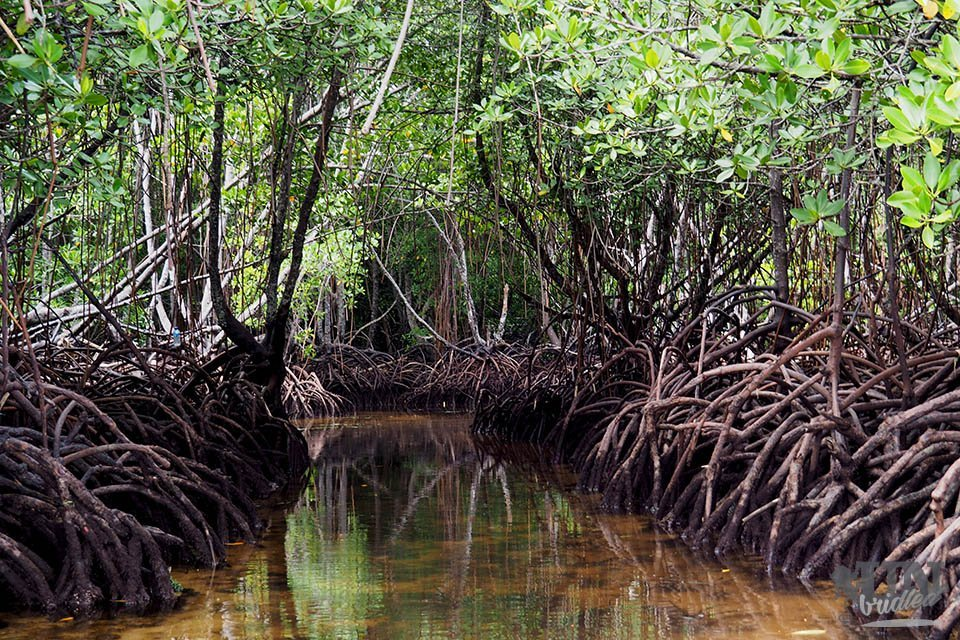 Water path in the mangrove forest of Nusa Lembongan