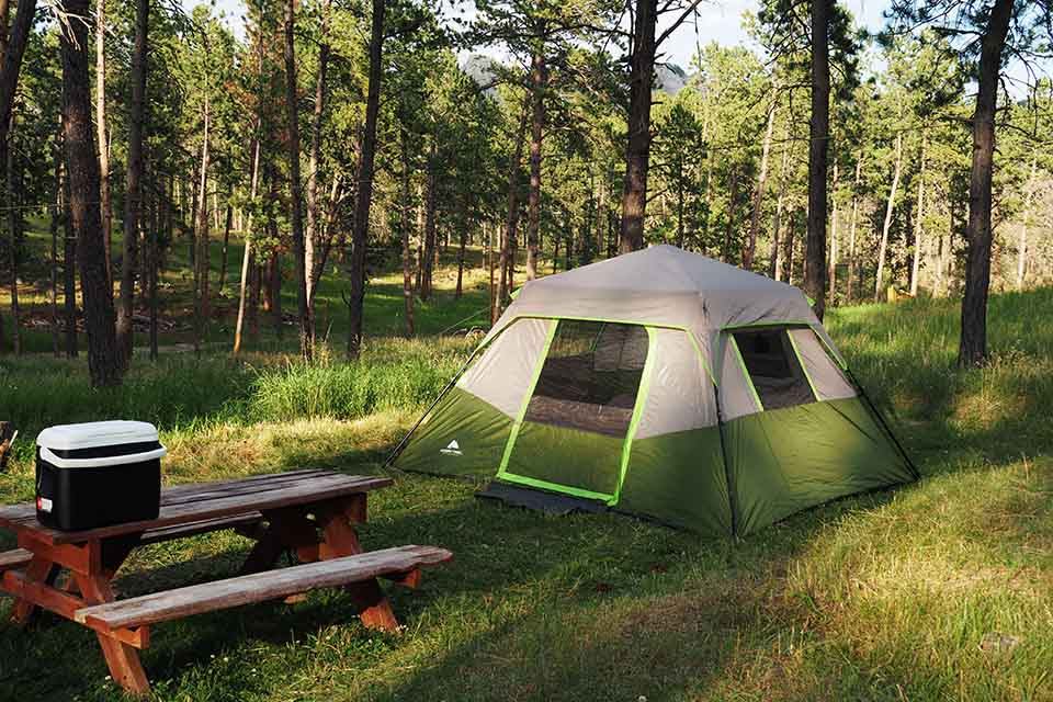 Tent surrounded by trees
