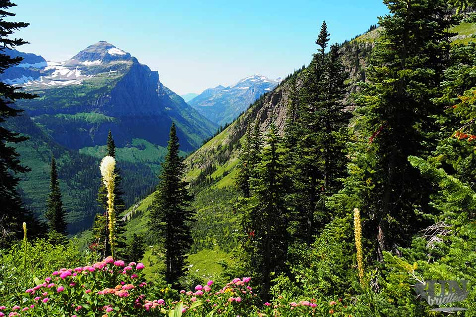 Mountain view with stunning flora in the foreground at Glacier National Park
