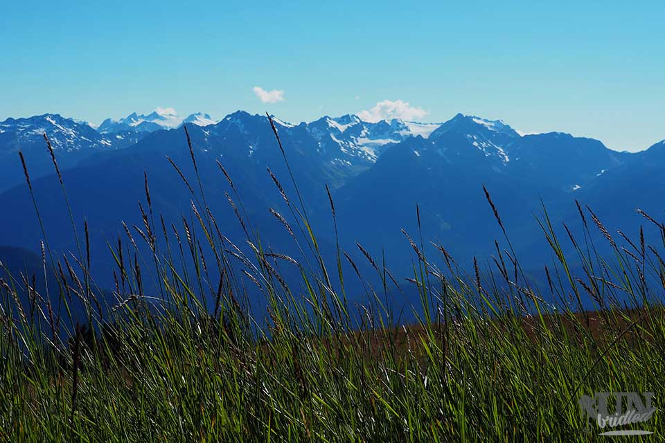 Green grass in the foreground and the view of Mount Olympic and other high peaks from a visitors center in Olympic National Park