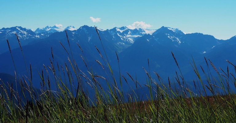 Mountain scene with grass in the foreground at Olympic National Park