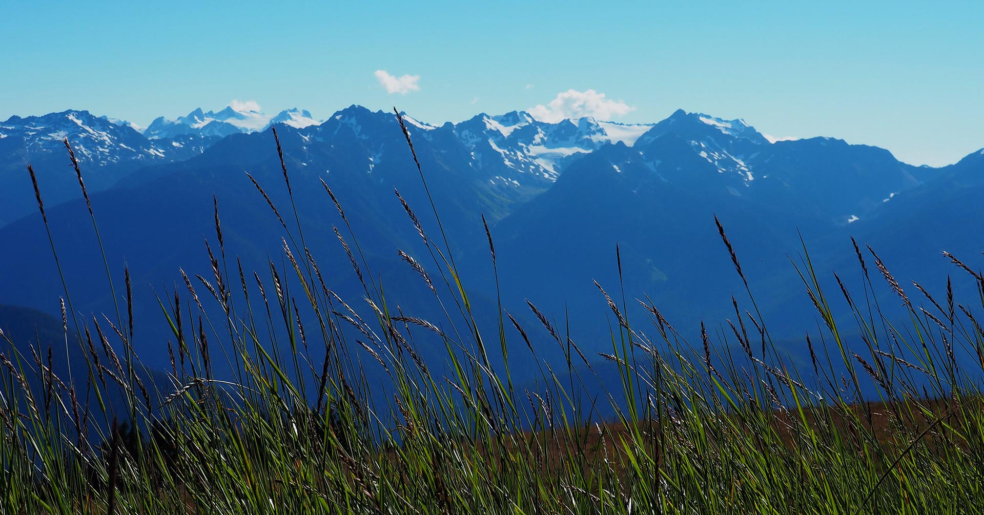 Explore natural diversity in the Olympic National Park