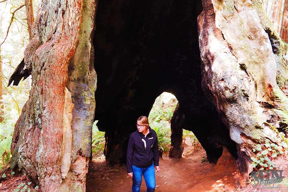 Woman inside a massive Redwood tree
