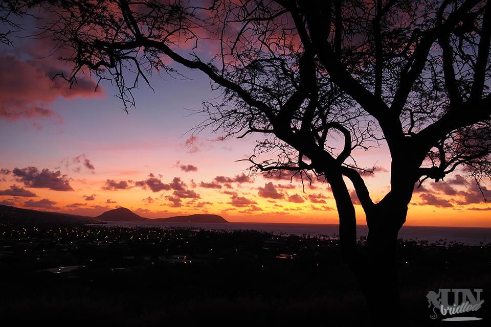Sonnenaufgang auf Hawaii mit einem dunklen Baum im Vordergrund