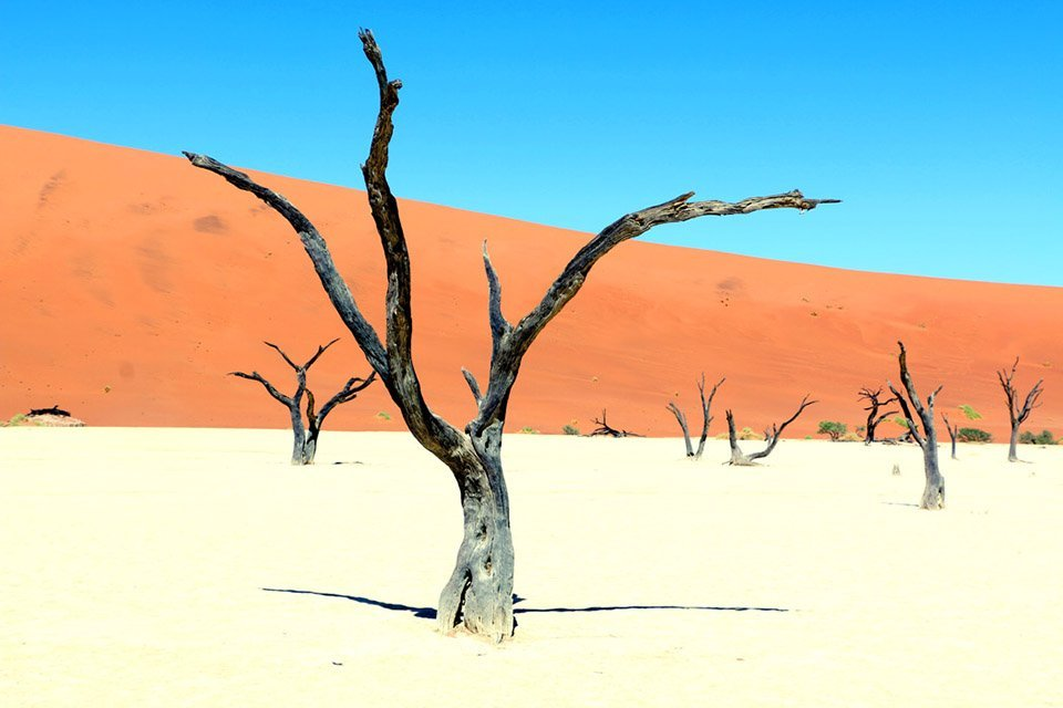 Desert scene from Namibia: One of the best adventure destinations
