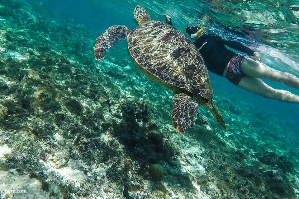 Underwater scene from the Philippines: One of the best adventure destinations for outdoor junkies