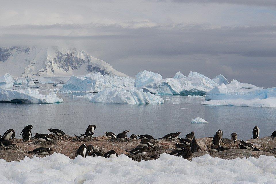 Pinguine in der Antarktis - Eines der besten Reiseziele für Outdoor-Junkies in 2018