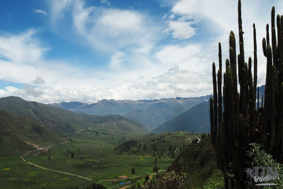 View of fields and mountains in Colca Canyon with a large cactus in the foreground