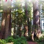 Riesige Redwoods Bäume mit einer Bank und dem Text: Ein Tag in den Redwoods