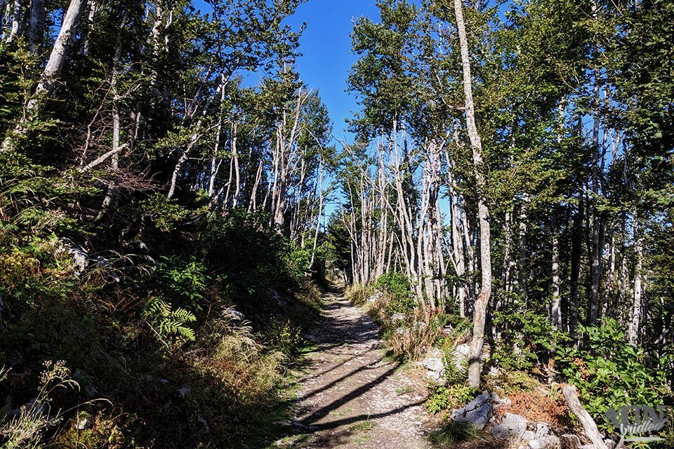 Hiking trail through the forest to Babina Glava