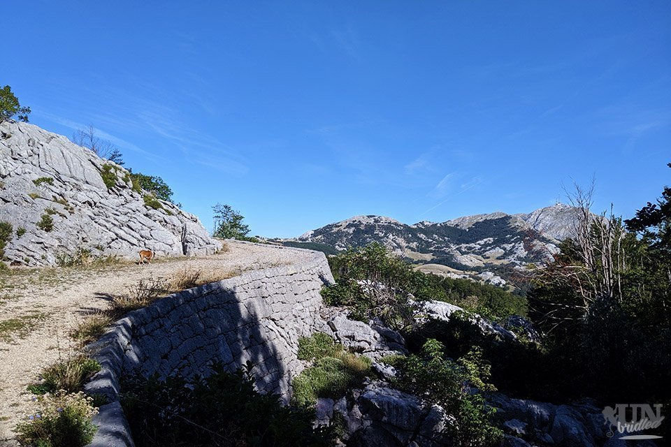 Rocky hiking path uphill with the highest peaks of Lovcen National Park in the background