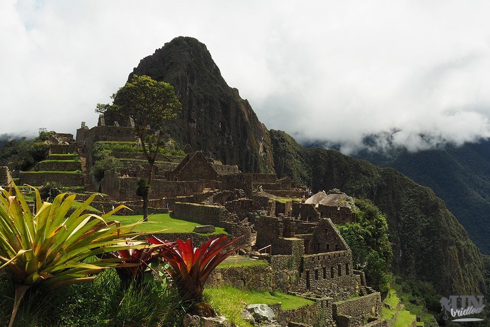 Inca ruins of Machu Picchu from the side with plants in the foreground