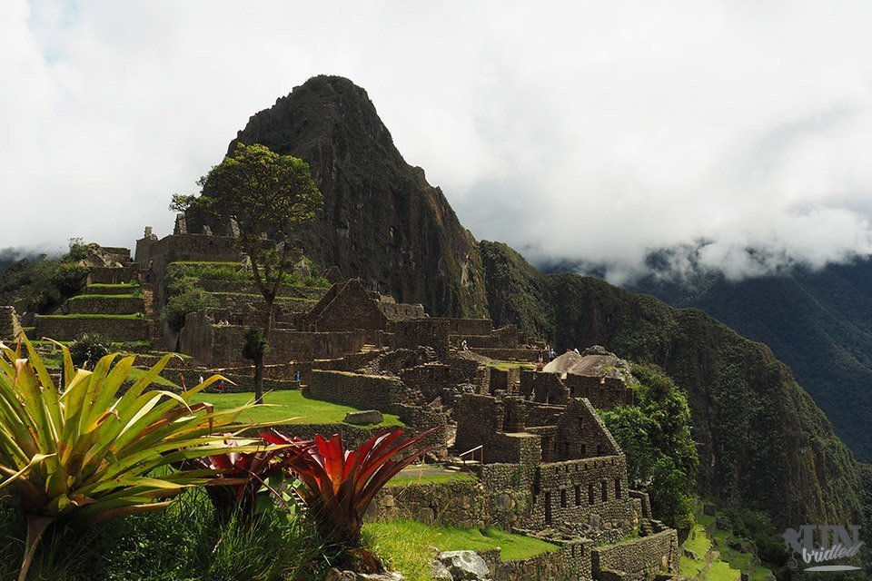 Machu Picchu in Peru with plants in the foreground